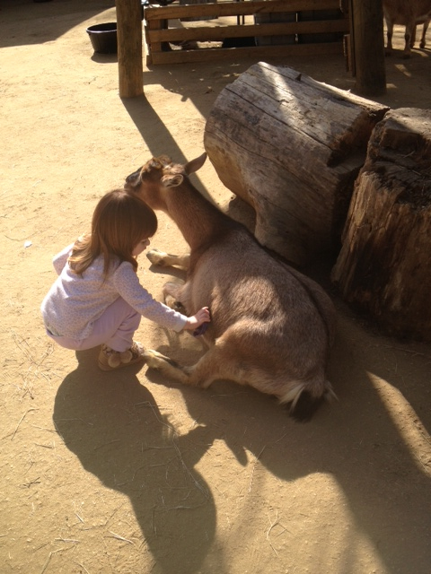 Mia zoo 1