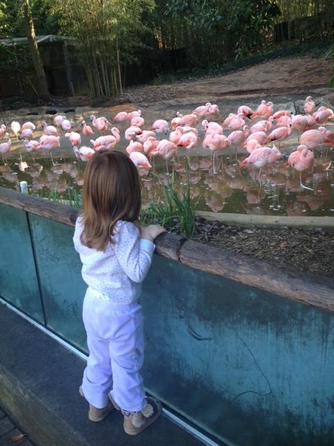 Mia zoo 9